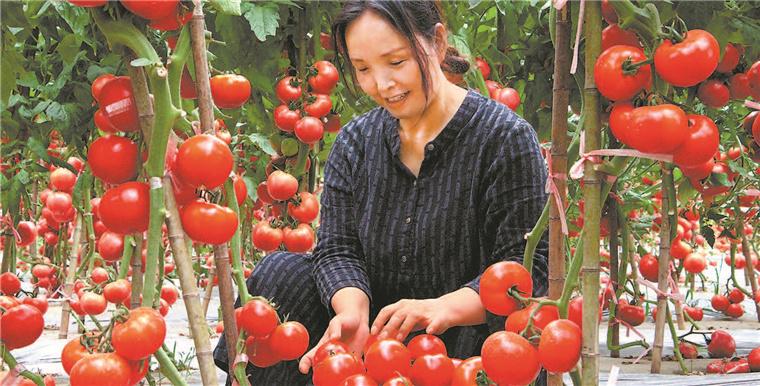 特色產業助農增收