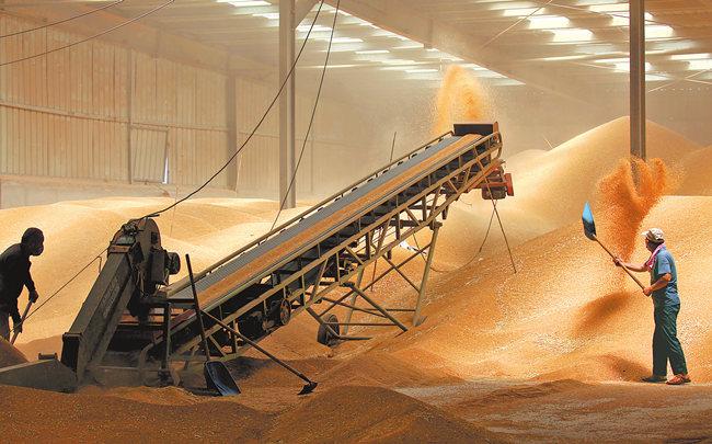 今年我省小麦质优量足
