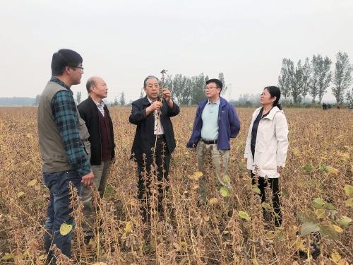 技术集成促大豆高产