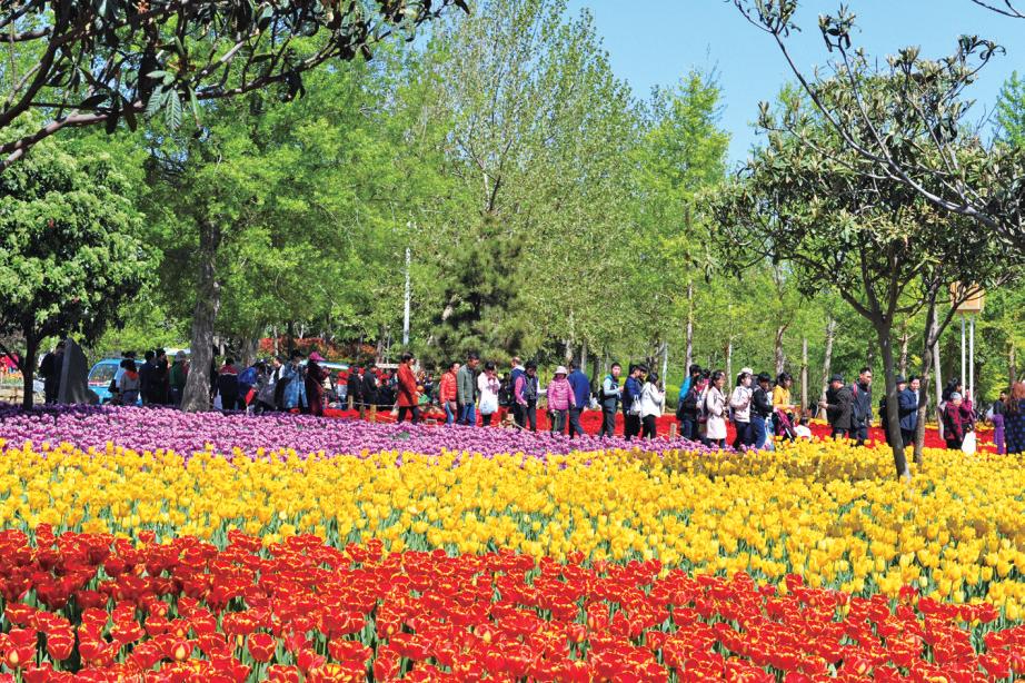 绿博园问花节本周六开幕