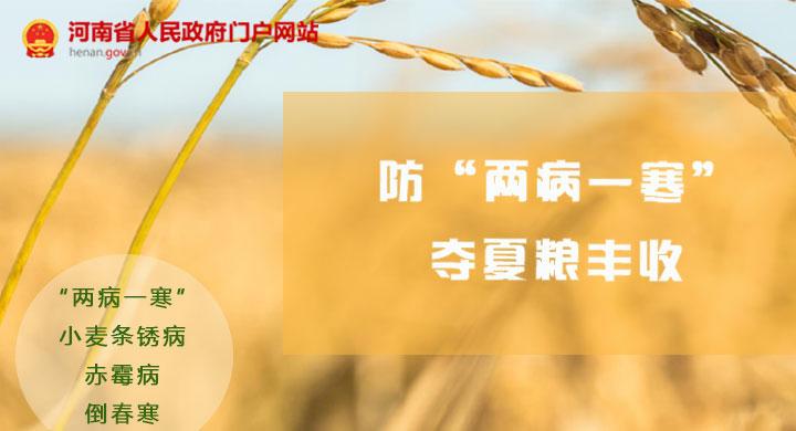 """圖解:河南發布通知 防""""兩病一寒""""奪夏糧豐收"""