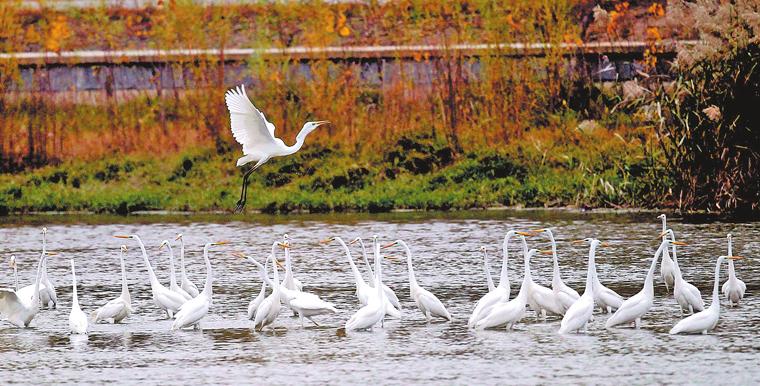 賈魯河畔 渚清沙白鳥飛回