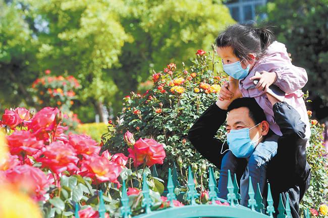 花开中原满眼春
