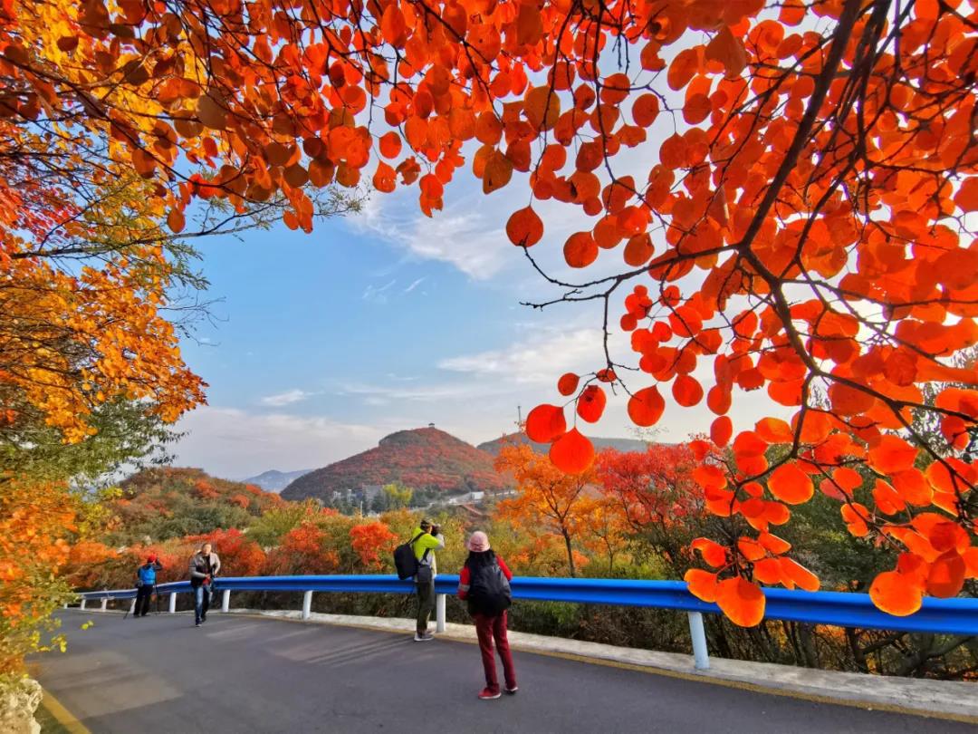 万亩红叶等你来赏 2020焦作(青天河)红叶节启幕