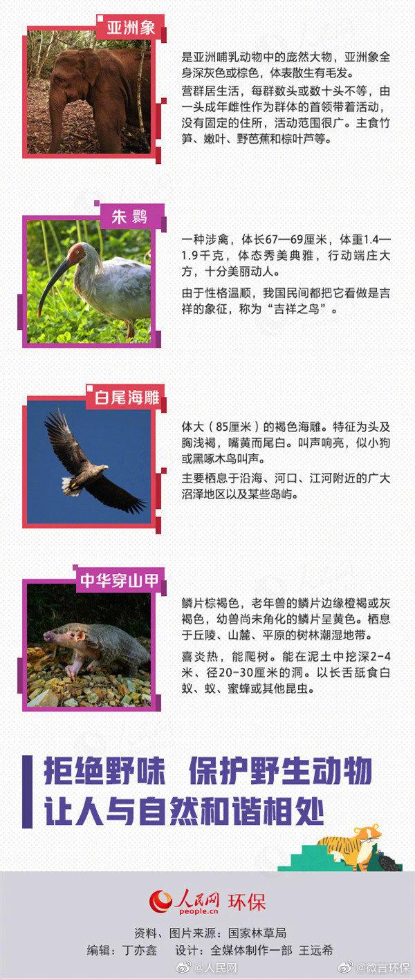 保护野生动植物,实质上就是保护人类赖以生存的生态环境,就是保护人类的的家园。