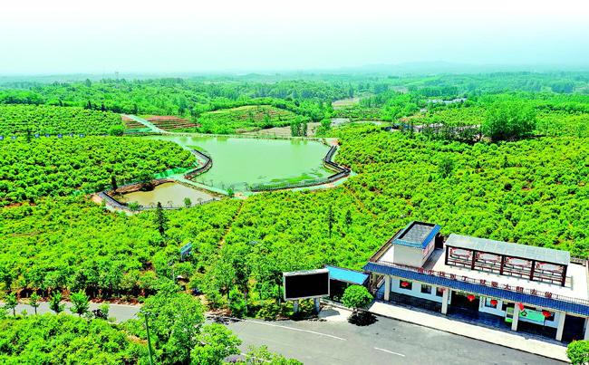 小油茶成了乡村振兴大产业
