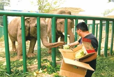 Sweet Zongzi or Salty Zongzi, Which Is the Elephants' Favorite