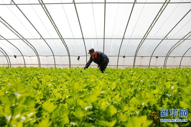 【图片新闻】河南宝丰:初春农事忙