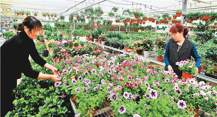 河南:鲜花铺就转型路