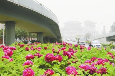 """外地车辆不限行、推出停车惠民举措<br>洛阳为看牡丹的客人""""开道"""