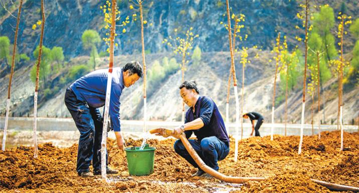 众人植树树成林