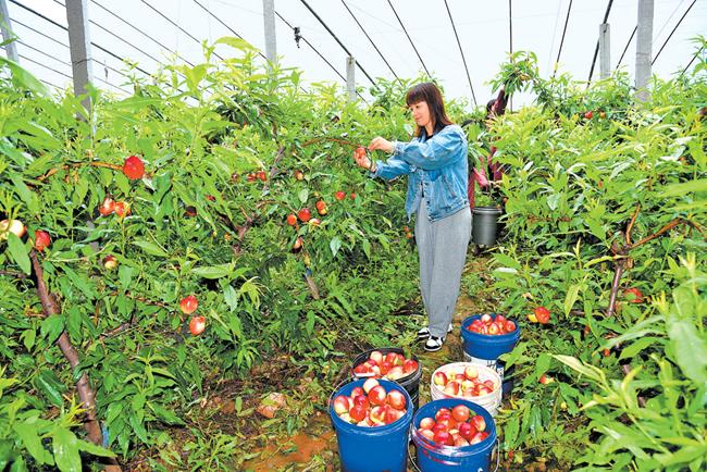 省委一号文件解读之三  以农业产业化助力乡村振兴