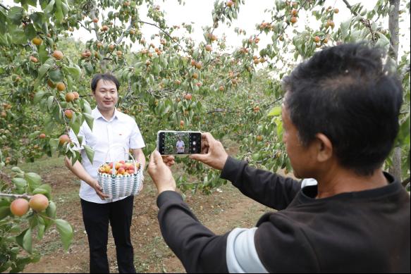 直播卖杏   助农增收  ---淇县审计局驻村第一书记直播卖杏
