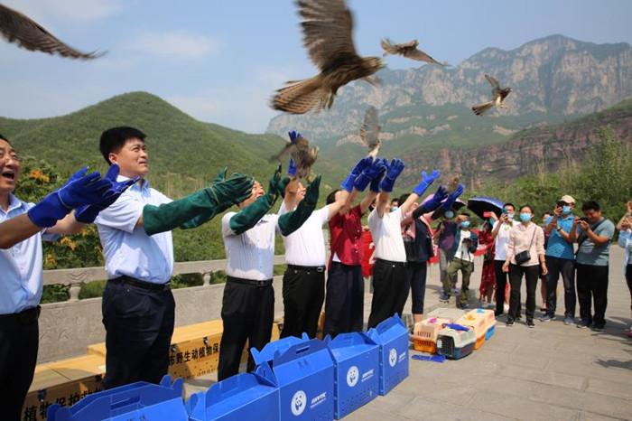 图/文:我省最大规模野生动物放归活动在焦作举办