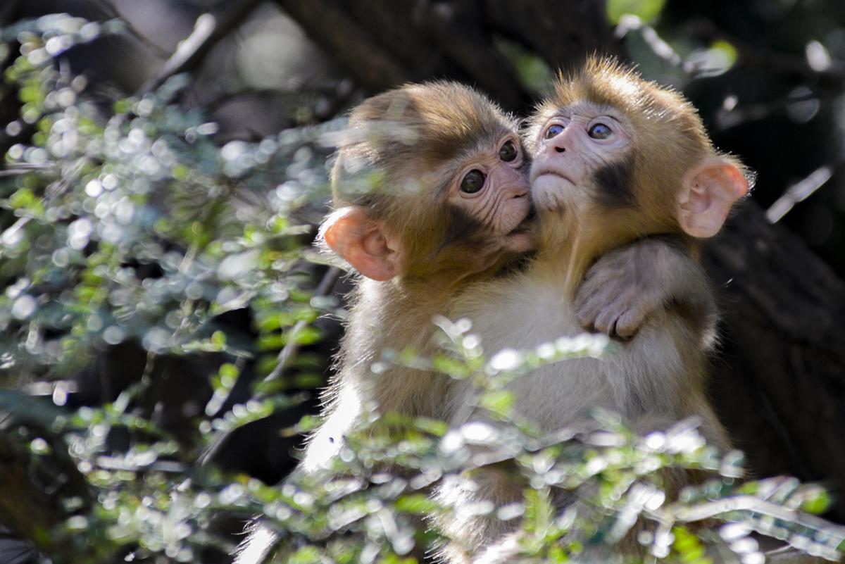 河南济源太行山国家级自然保护区猕猴生态保护论坛顺利开幕