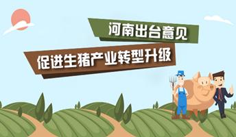 图解:河南出台意见促进生猪产业转型升级