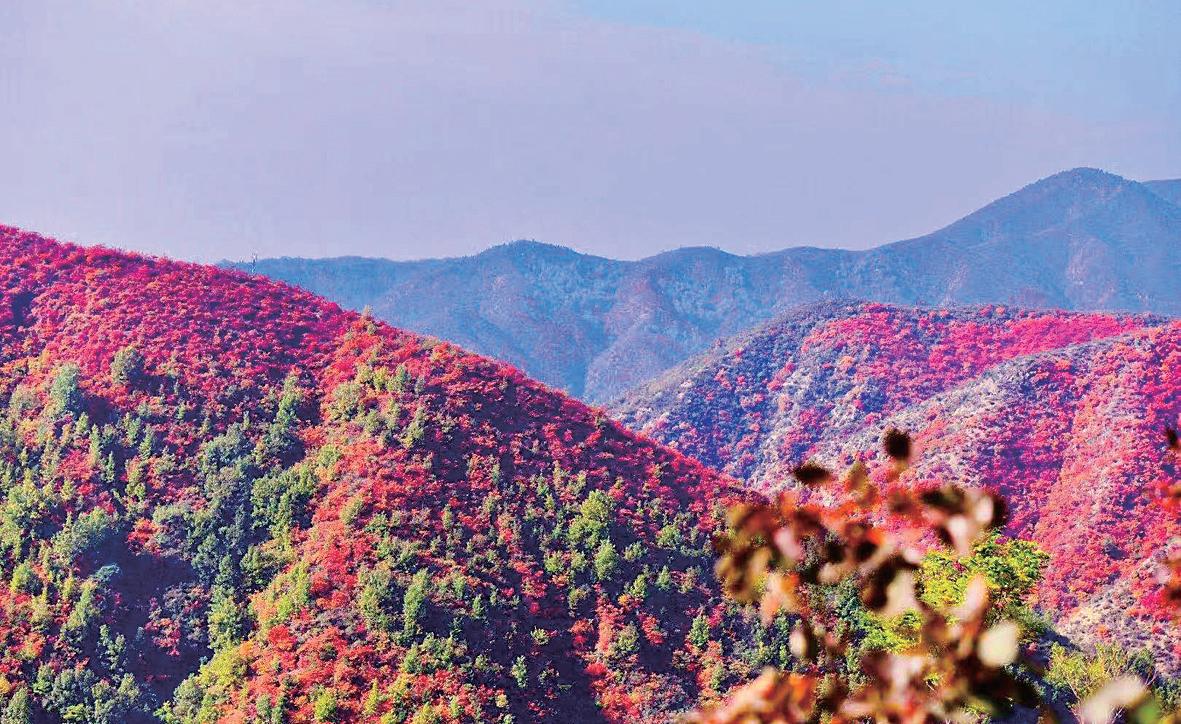 到济源▲娲皇谷 邂逅红←叶盛宴