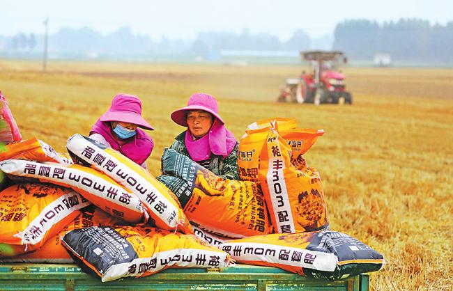 三夏新观察:玉米种植受青睐 花生产业须提升
