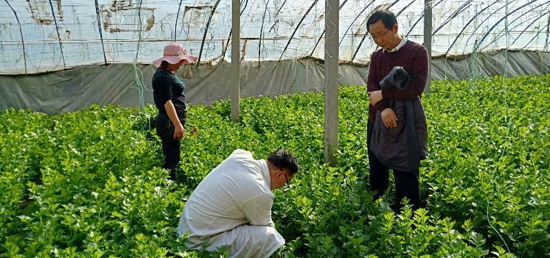 http://www.zgmaimai.cn/shipinnongfu/235993.html