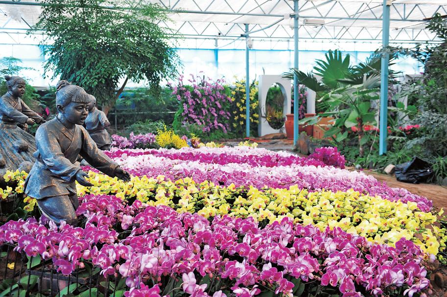 賞蝴蝶蘭 看菊花展 品民俗就到鄭州綠博園