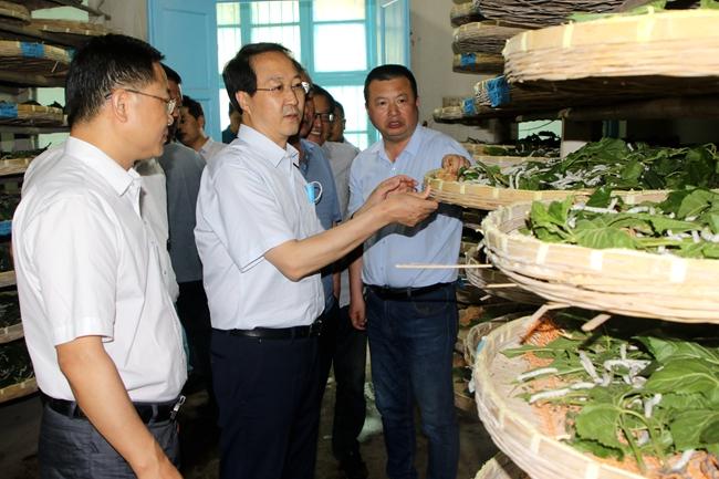 省农业农村厅党组成员谢长伟莅临省蚕业科学研究院调研指导工作