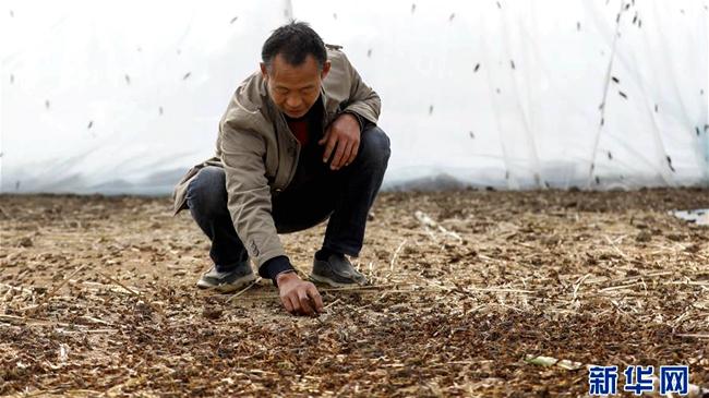 【图片新闻】河南宝丰:发展特色产业 促进农民增收