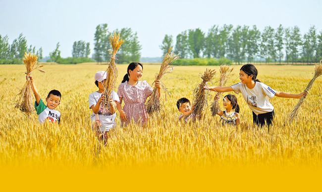 金扁担 金小麦 金玉米